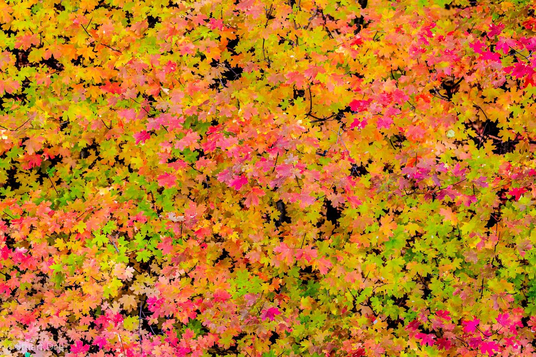 Fall colors, Utah, USA