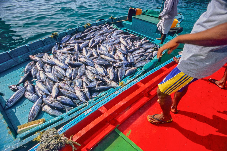 Fish on fishing dhoni, Male, Maldives