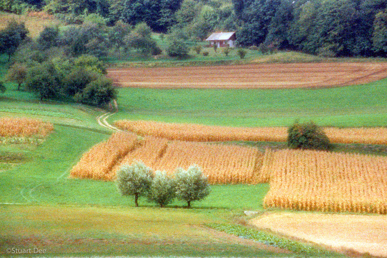 Farmland (impressionistic), Piran, Slovenia