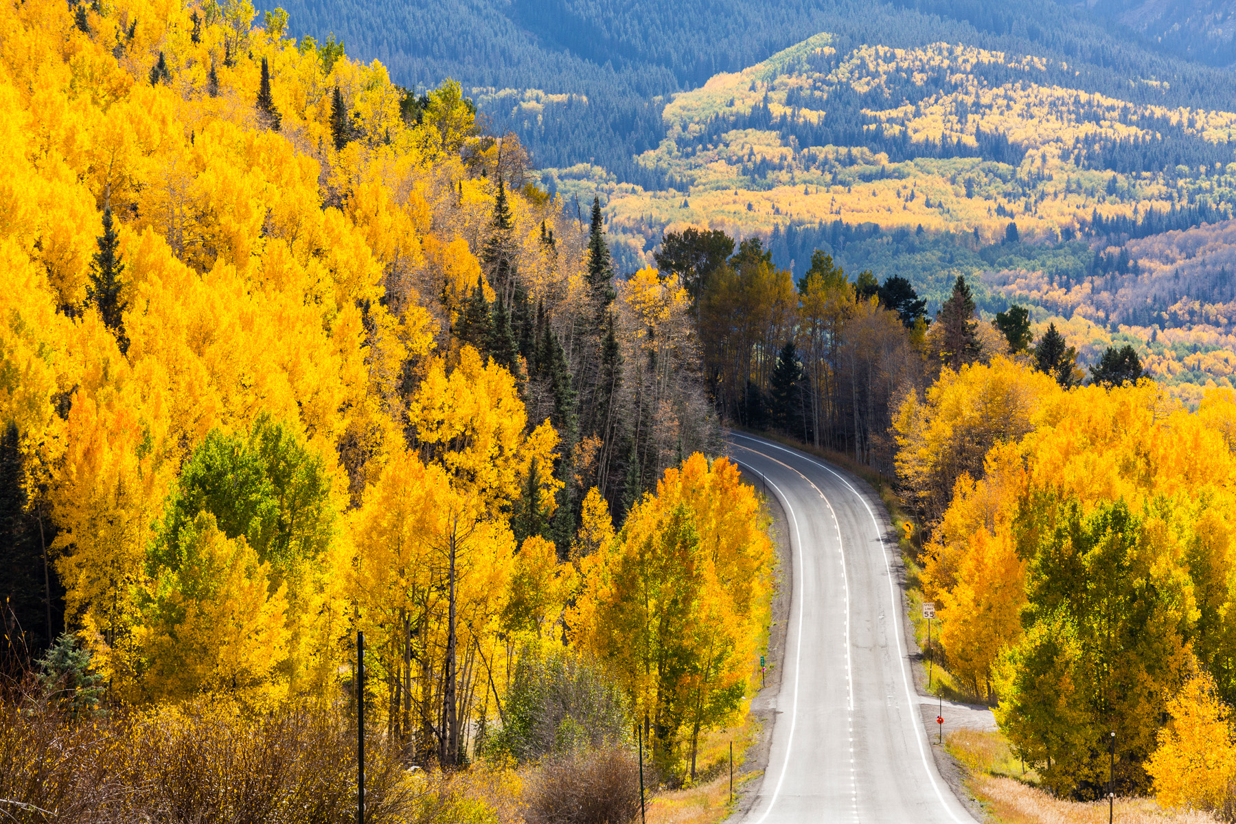 Landscape: A road winds through aspen forests in the San Juan Mountains of Colorado in Autumn near Telluride