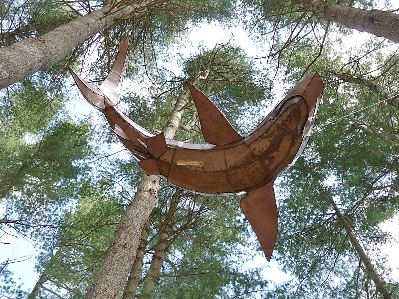 Pine sharks 2.jpg