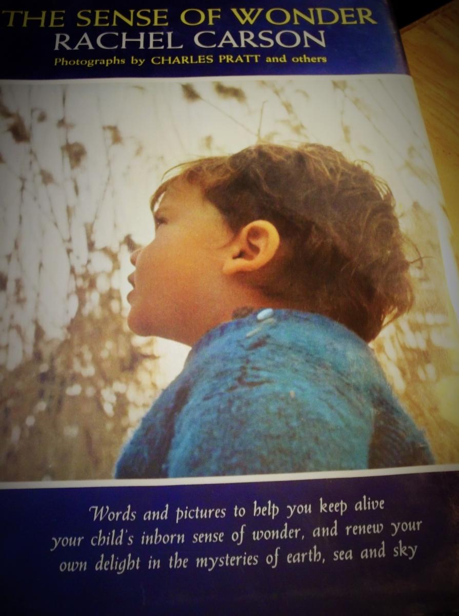 The Sense of Wonder  , Rachel Carson, 1965