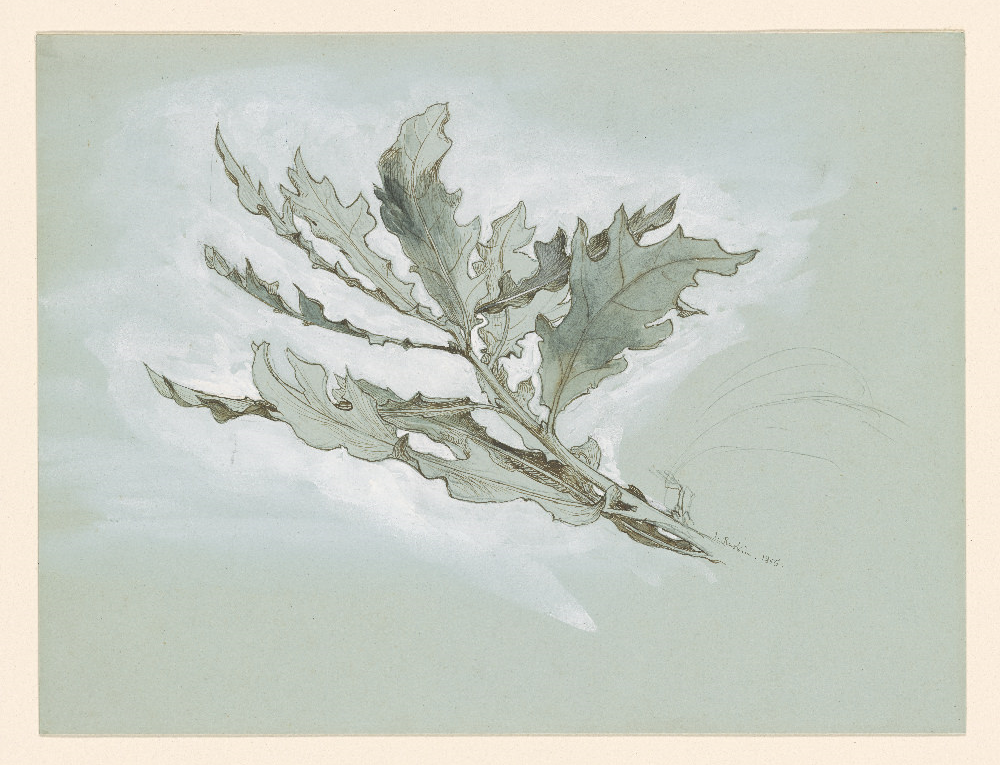 John Ruskin   A Cluster of Oak Leaves [drawing]   1977.27 Pierpont Morgan Library Dept. of Drawings and Prints. Pen and black ink, pencil, gray wash, and white tempera, on blue wove paper.