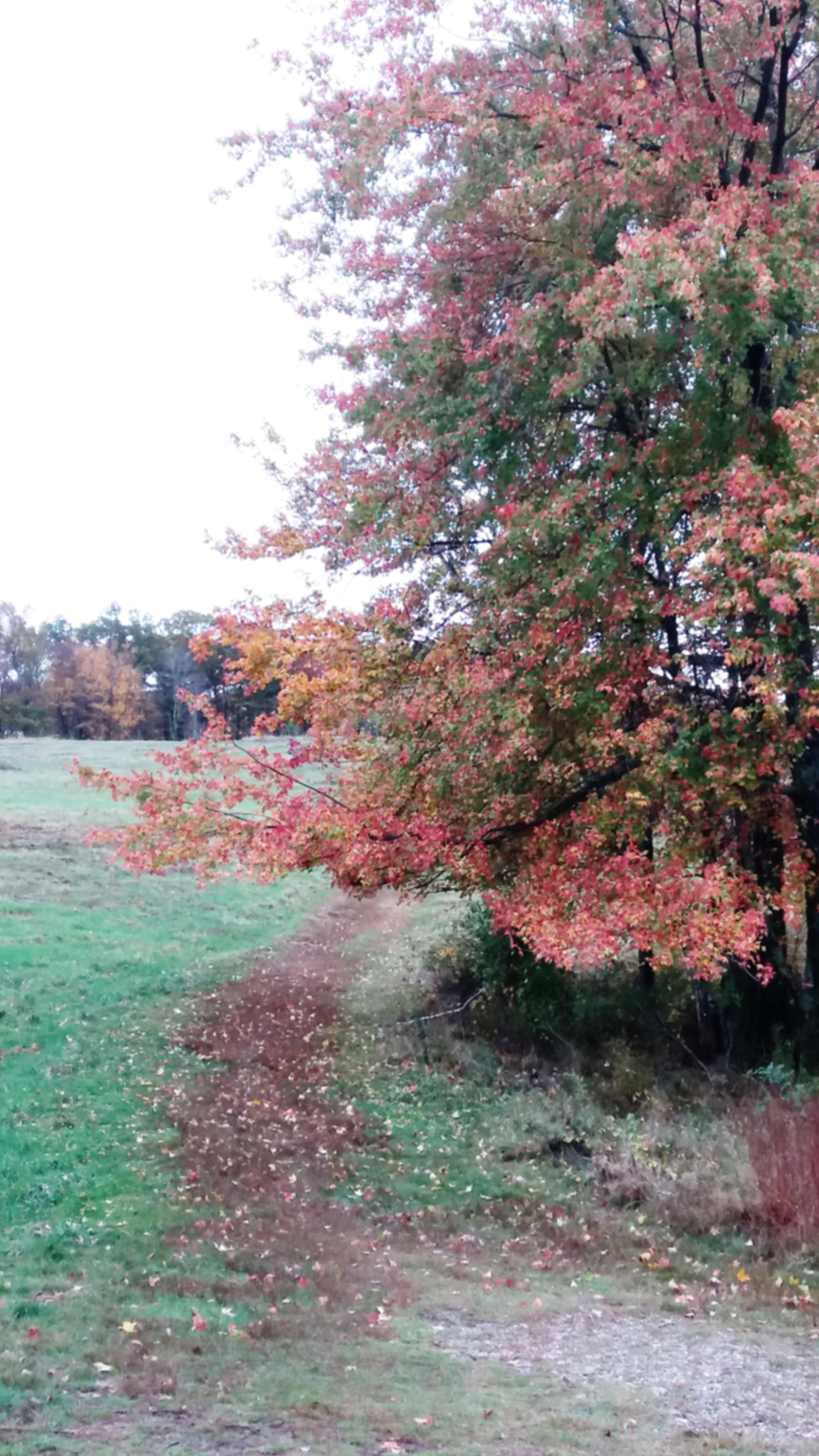 conservationland-4.jpg
