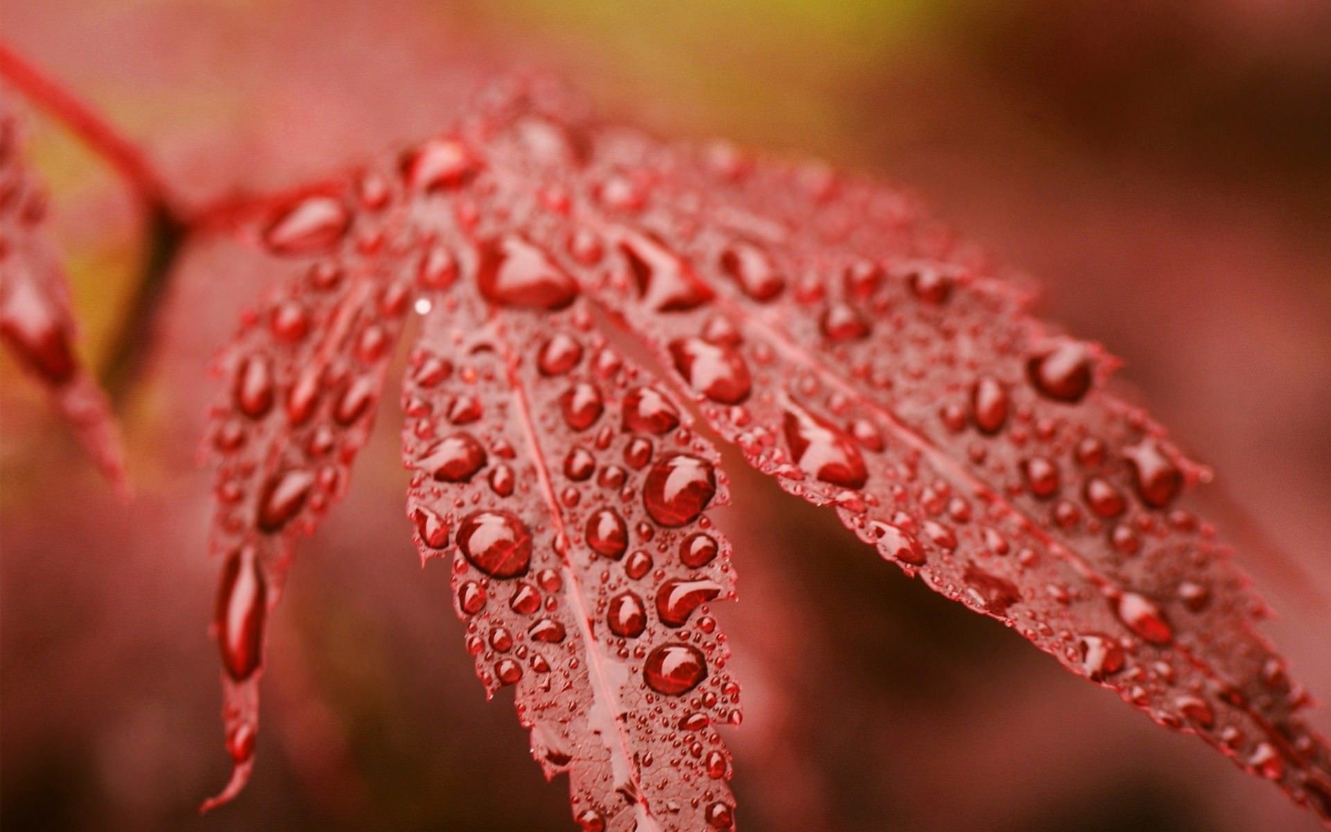 rain-autumn-leaf.jpg