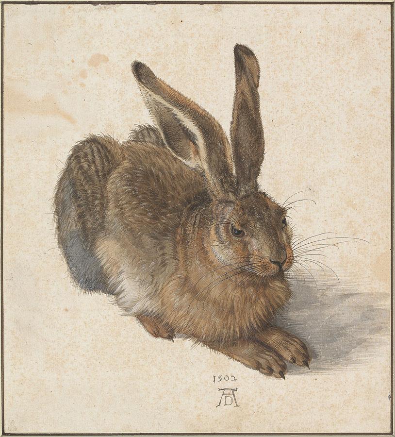 Albrecht Dürer - Hare, 1502