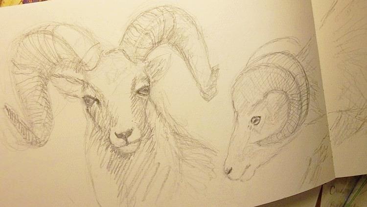 goat-natural-history-museum.jpg