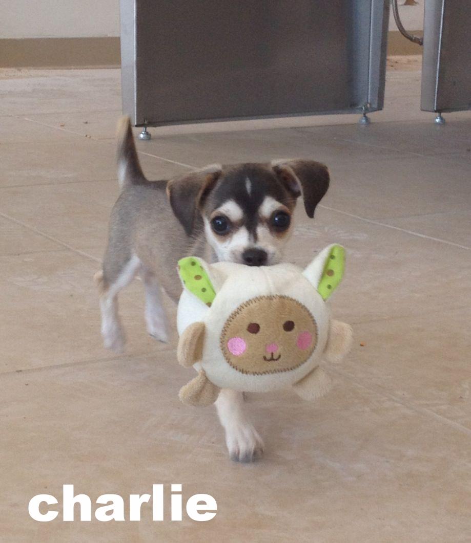 charlie1.jpg