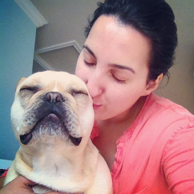 Love getting kisses from mommy….😴 #buhi #dogslife #instafrenchie #frenchies #frenchbullies –posted by handsomethepup on Instagram