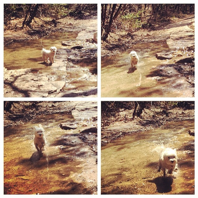 Daisy takes a dash #thenakeddog #austin #hiking #boarding #training #atx #dogsofaustin #dogsofinstagram–posted by thenakeddog on Instagram