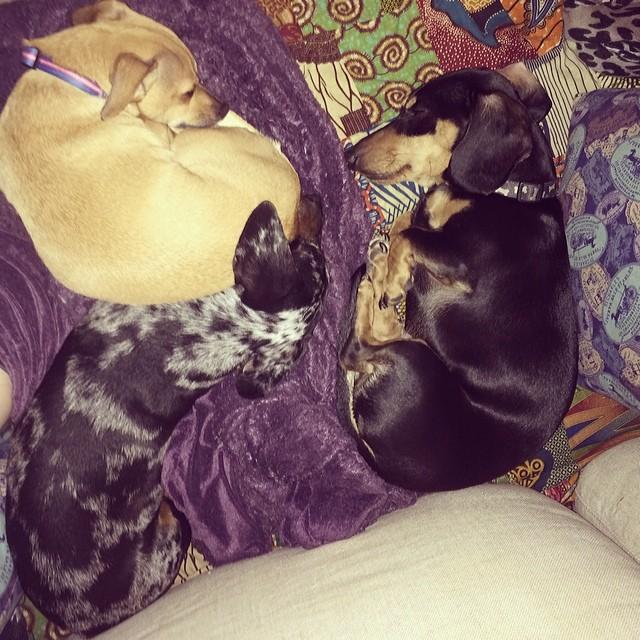 This is the best ever #sleepypups #thenakeddog #austin #hiking #boarding #training #atx #dogsofaustin #dogsofinstagram–posted by thenakeddog on Instagram