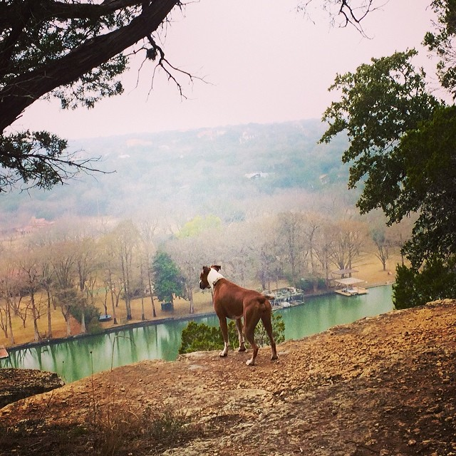 A trail with a view #thenakeddog #austin #hiking #boarding #training #atx #dogsofaustin #dogsofinstagram–posted by thenakeddog on Instagram
