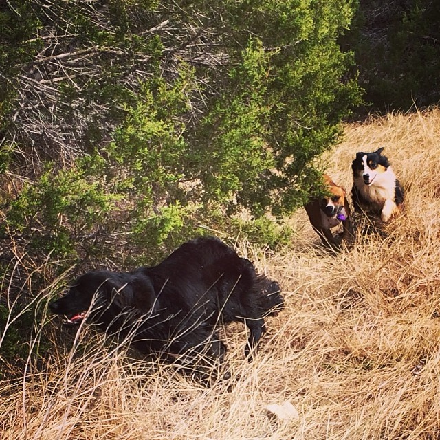 A good old fashioned run around a tree #thenakeddog #austin #hiking #boarding #training #atx #dogsofaustin #dogsofinstagram–posted by thenakeddog on Instagram