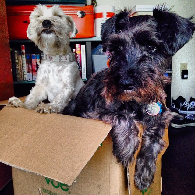 Brother and I in a box. 😩 I don't like it.–posted by grendel_thedog on Instagram