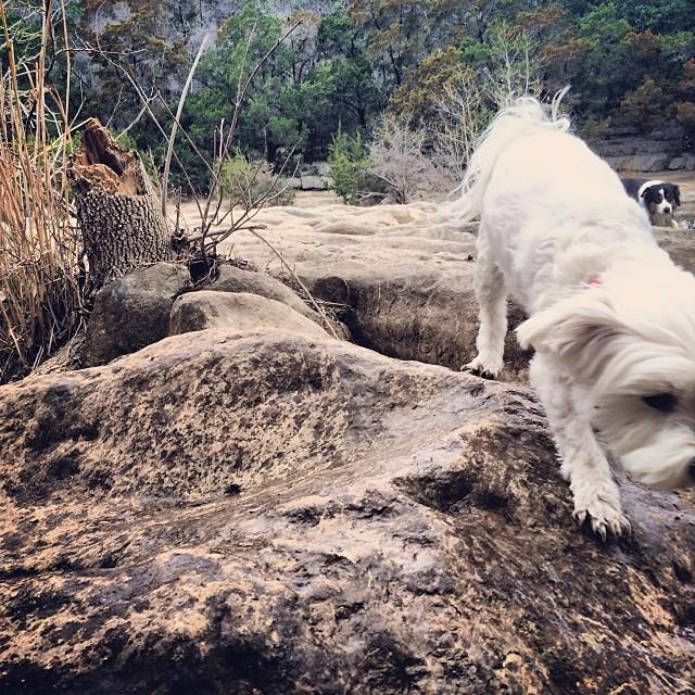 Daisy in the Greenbelt #thenakeddog #austin #hiking #boarding #training #atx #dogsofaustin #dogsofinstagram–posted by thenakeddog on Instagram