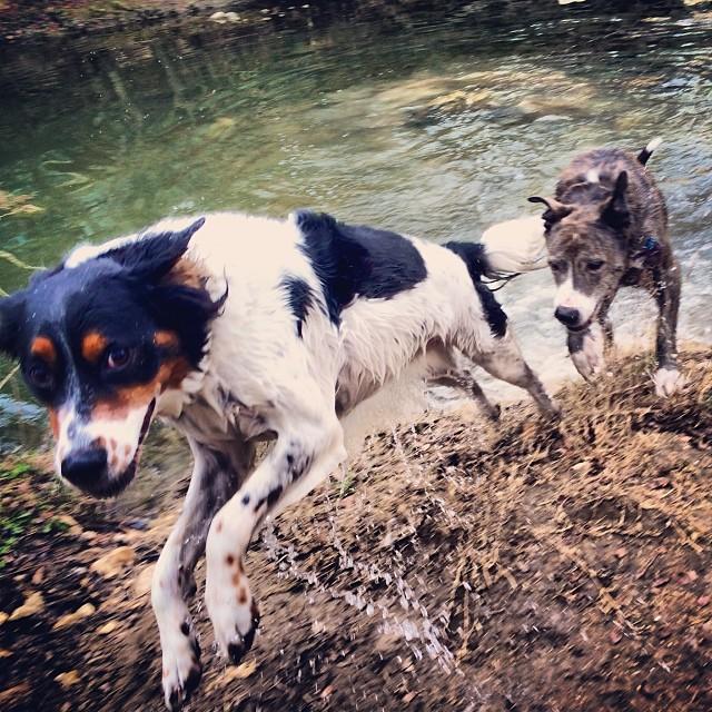 Sisters taking a dip on an icy Austin day #thenakeddog #austin #hiking #boarding #training #atx #dogsofaustin #dogsofinstagram–posted by thenakeddog on Instagram