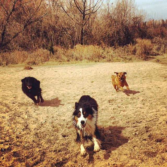 Smiles all around #thenakeddog #austin #hiking #boarding #training #atx #dogsofaustin #dogsofinstagram–posted by thenakeddog on Instagram