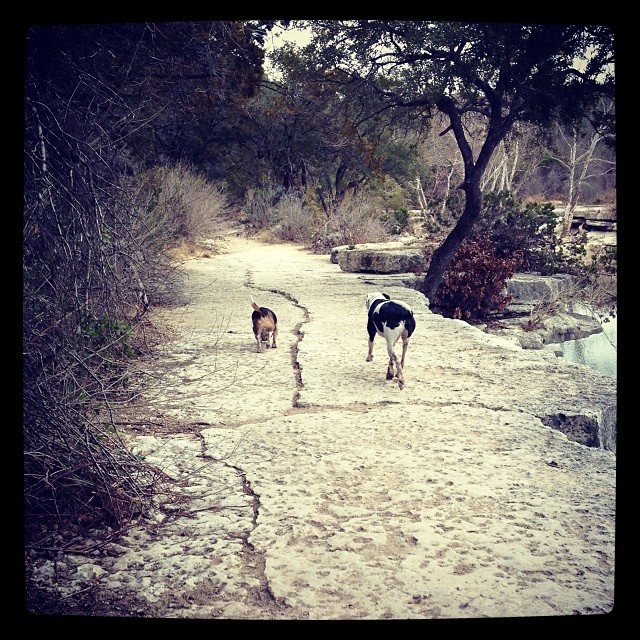 #bestfriends on a winter hike. #bullcreek #austin #dogs #dogstagram #beagle #pitbull #atx–posted by saramaic on Instagram