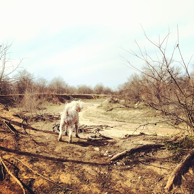 Daisy overseeing her kingdom #thenakeddog #austin #hiking #boarding #training #atx #dogsofaustin #dogsofinstagram–posted by thenakeddog on Instagram