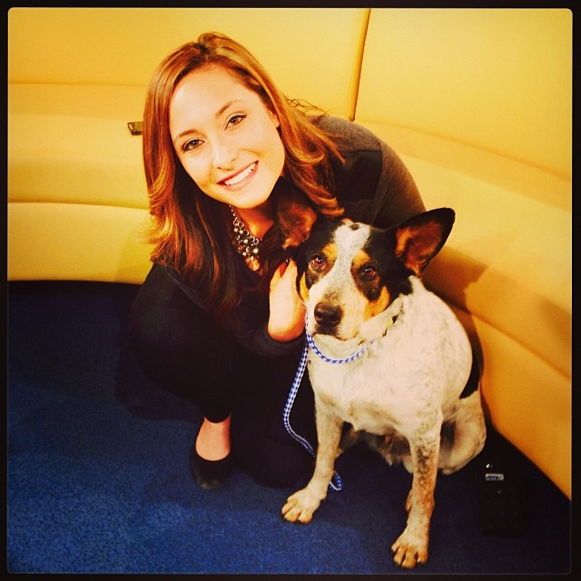 Pivo and his #hugeears at #Fox7 shooting the #Petoftheweek spot with @scarlettgreyson - tune in tomorrow morning to see him, or just head to TLAC (1156 Cesar Chavez in #ATX) to adopt this cute #cattledog today! –posted by chantwall on Instagram