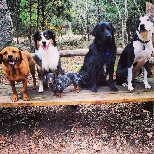 The Naked Dog family #thenakeddog #austin #hiking #boarding #training #atx #dogsofaustin #dogsofinstagram–posted by thenakeddog on Instagram