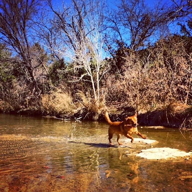 Lucy - a love story  #thenakeddog #austin #hiking #boarding #training #atx #dogsofaustin #dogsofinstagram–posted by thenakeddog on Instagram