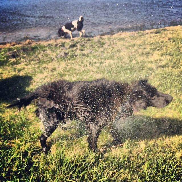 Shake! #thenakeddog #austin #hiking #boarding #training #atx #dogsofaustin #dogsofinstagram–posted by thenakeddog on Instagram