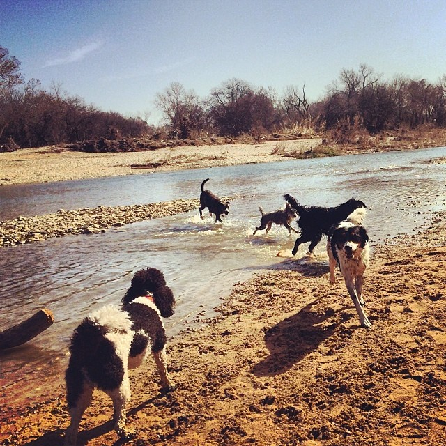 Beach bums #thenakeddog #austin #hiking #boarding #training #atx #dogsofaustin #dogsofinstagram–posted by thenakeddog on Instagram