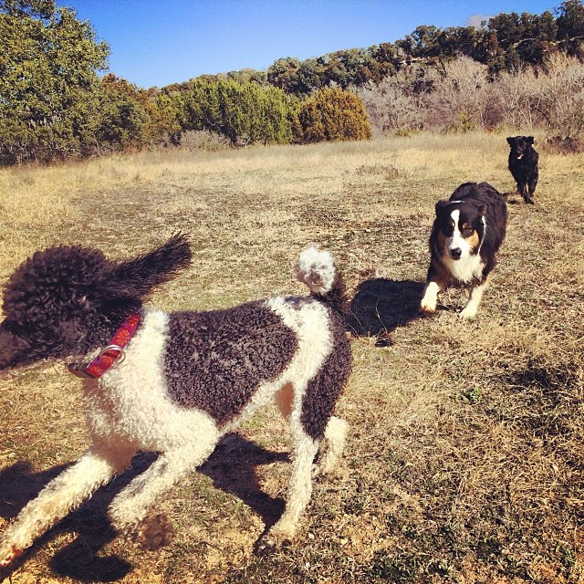 Three by three #thenakeddog #austin #hiking #boarding #training #atx #dogsofaustin #dogsofinstagram–posted by thenakeddog on Instagram