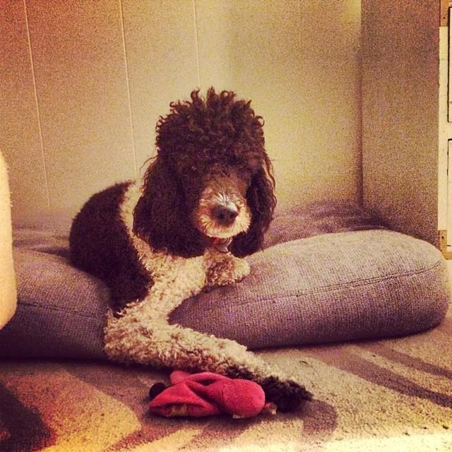 Minette's cute pose #thenakeddog #austin #hiking #boarding #training #atx #dogsofaustin #dogsofinstagram–posted by thenakeddog on Instagram