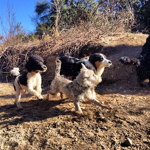 Playing with their new bud Gusgus #thenakeddog #austin #hiking #boarding #training #atx #dogsofaustin #dogsofinstagram–posted by thenakeddog on Instagram
