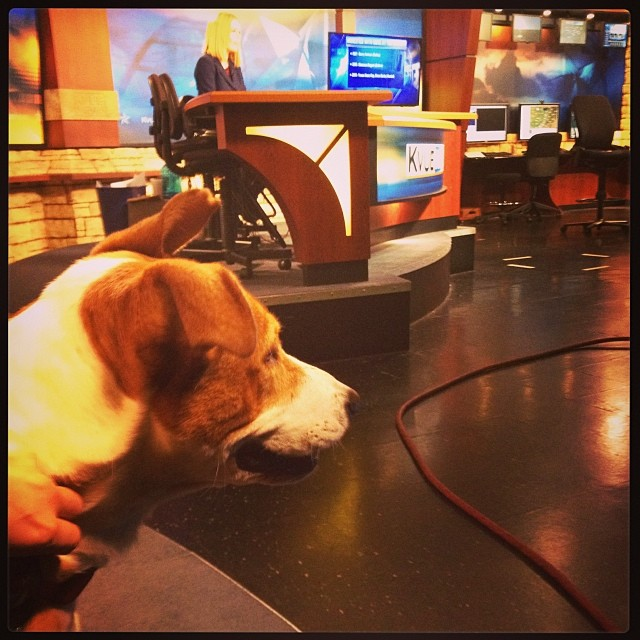 Janie awaits her @kvuenews #Petoftheweek spot while @jademingus delivers the headlines. Adopt calm, gentle Janie at TLAC (1156 Cesar Chavez in #ATX) today! 🐾 #dogsofig #broadcastnews #kvue #atx #mutts–posted by skylinepetcare on Instagram