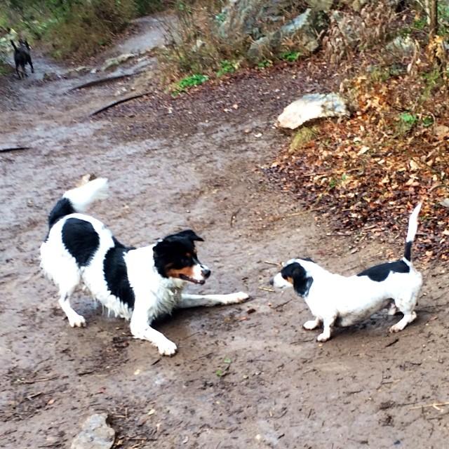 Twins #thenakeddog #austin #hiking #boarding #training #atx #dogsofaustin #dogsofinstagram–posted by thenakeddog on Instagram