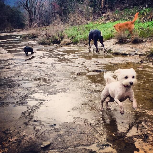 My girls rockin' out on the trails #thenakeddog #austin #hiking #boarding #training #atx #dogsofaustin #dogsofinstagram–posted by thenakeddog on Instagram
