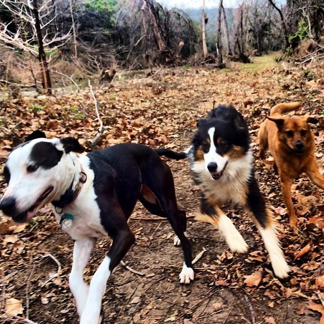 Nerds #thenakeddog #austin #hiking #boarding #training #atx #dogsofaustin #dogsofinstagram–posted by thenakeddog on Instagram