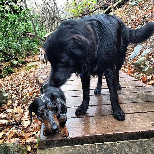 Friends-ish #thenakeddog #austin #hiking #boarding #training #atx #dogsofaustin #dogsofinstagram–posted by thenakeddog on Instagram