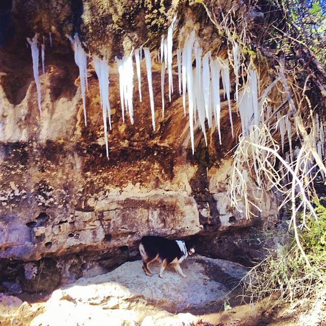 Cassie exploring the icicle cave #thenakeddog #austin #hiking #boarding #training #atx #dogsofaustin #dogsofinstagram #nprfrostypaws–posted by thenakeddog on Instagram