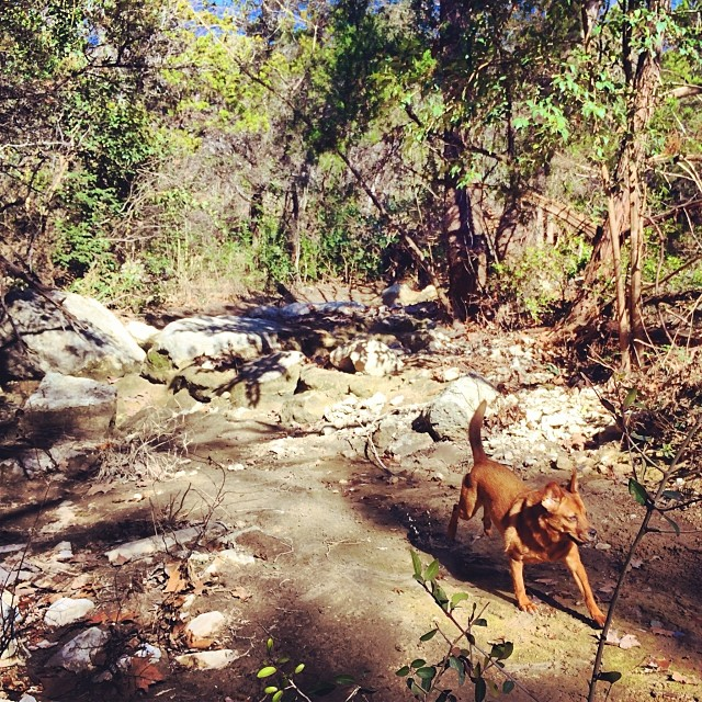 Lucy running on water #thenakeddog #austin #hiking #boarding #training #atx #dogsofaustin #dogsofinstagram–posted by thenakeddog on Instagram