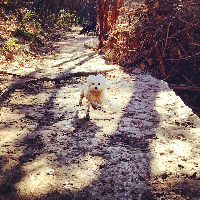 This is one awesome little fluff bal#thenakeddog #austin #hiking #boarding #training #atx #dogsofaustin #dogsofinstagram l–posted by thenakeddog on Instagram