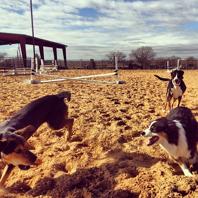 Chase #thenakeddog #austin #hiking #boarding #training #atx #dogsofaustin #dogsofinstagram–posted by thenakeddog on Instagram