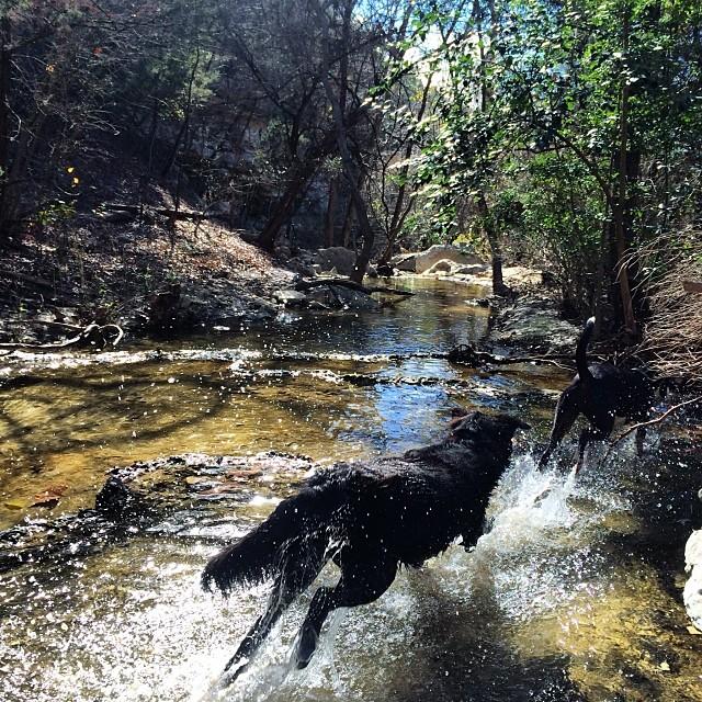 Audrey #thenakeddog #austin #hiking #boarding #training #atx #dogsofaustin #dogsofinstagram–posted by thenakeddog on Instagram
