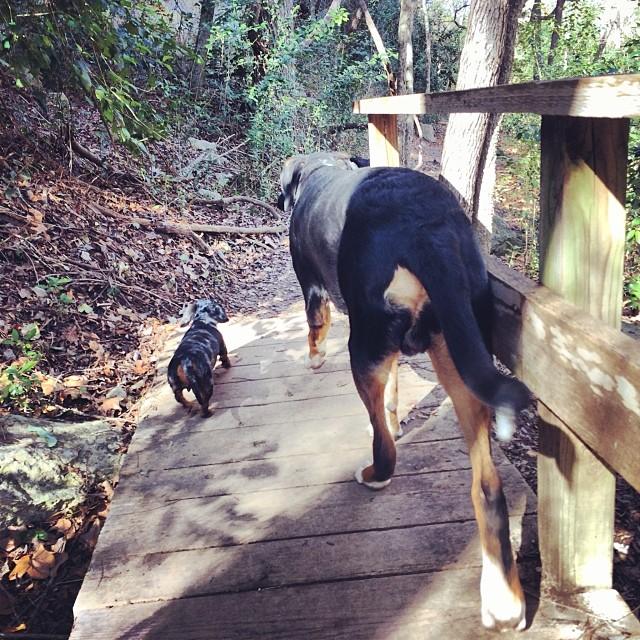Naked Dogs of all sizes #thenakeddog #austin #hiking #boarding #training #atx #dogsofaustin #dogsofinstagram–posted by thenakeddog on Instagram