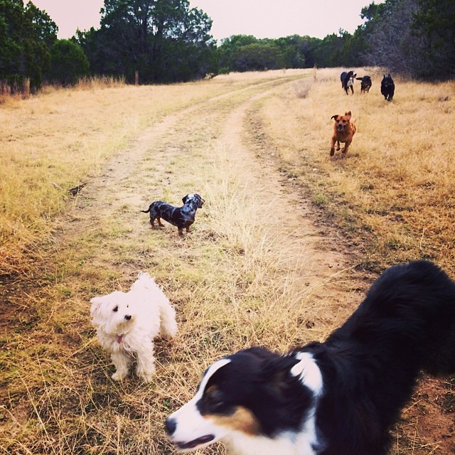 Today's crew #thenakeddog #austin #hiking #boarding #training #atx #dogsofaustin #dogsofinstagram–posted by thenakeddog on Instagram