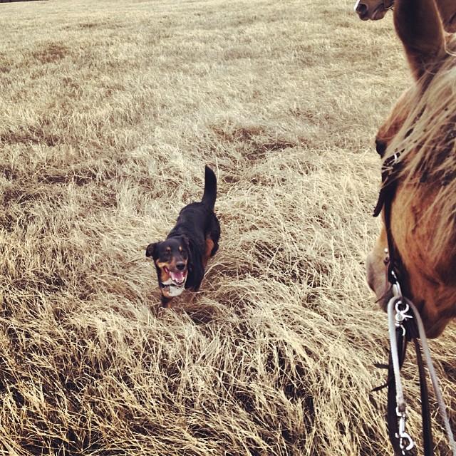 Ginny the cow dog #thenakeddog #austin #hiking #boarding #training #atx #dogsofaustin #dogsofinstagram–posted by thenakeddog on Instagram