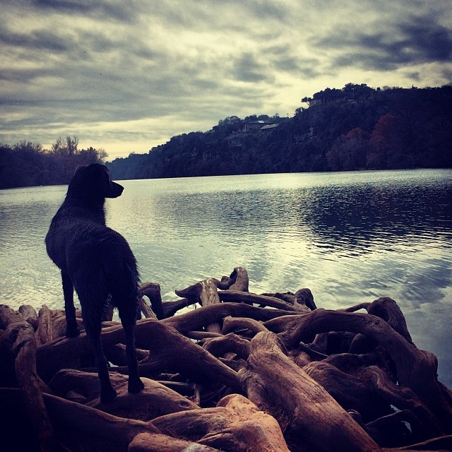 Lake gazing #thenakeddog #austin #hiking #boarding #training #atx #dogsofaustin #dogsofinstagram–posted by thenakeddog on Instagram