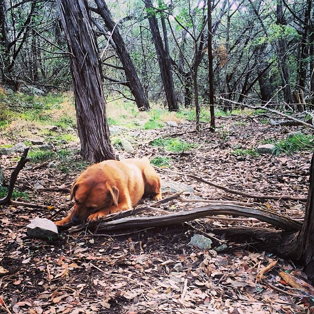 Lucy in stick heaven #thenakeddog #austin #hiking #boarding #training #atx #dogsofaustin #dogsofinstagram–posted by thenakeddog on Instagram