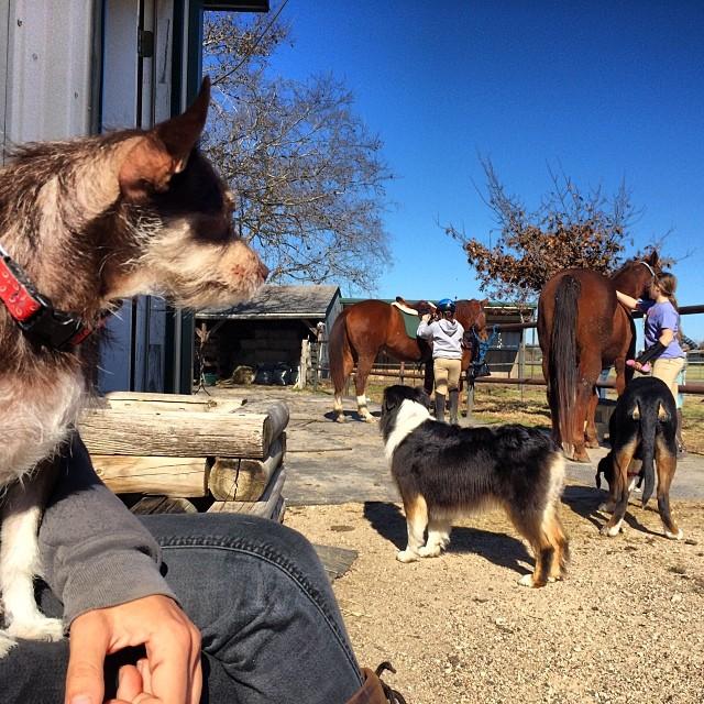 Bell at the barn #thenakeddog #austin #hiking #boarding #training #atx #dogsofaustin #dogsofinstagram–posted by thenakeddog on Instagram