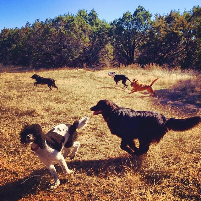 Flying dogs #thenakeddog #austin #hiking #boarding #training #atx #dogsofaustin #dogsofinstagram–posted by thenakeddog on Instagram