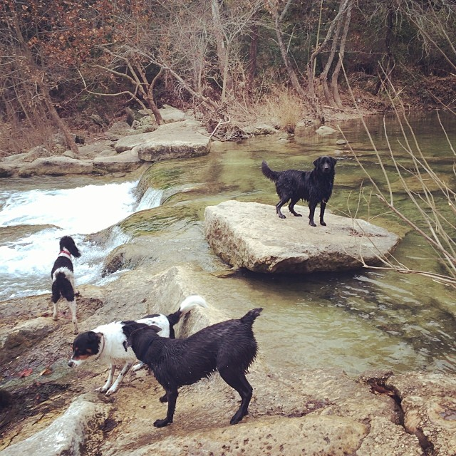 Happy hikers #thenakeddog #austin #hiking #boarding #training #atx #dogsofaustin #dogsofinstagram–posted by thenakeddog on Instagram