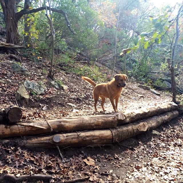 Perfect light today #thenakeddog #austin #hiking #boarding #training #atx #dogsofaustin #dogsofinstagram–posted by thenakeddog on Instagram